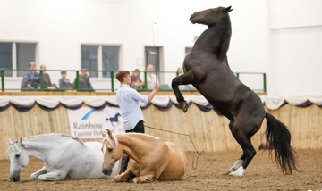 Your Horse Live training