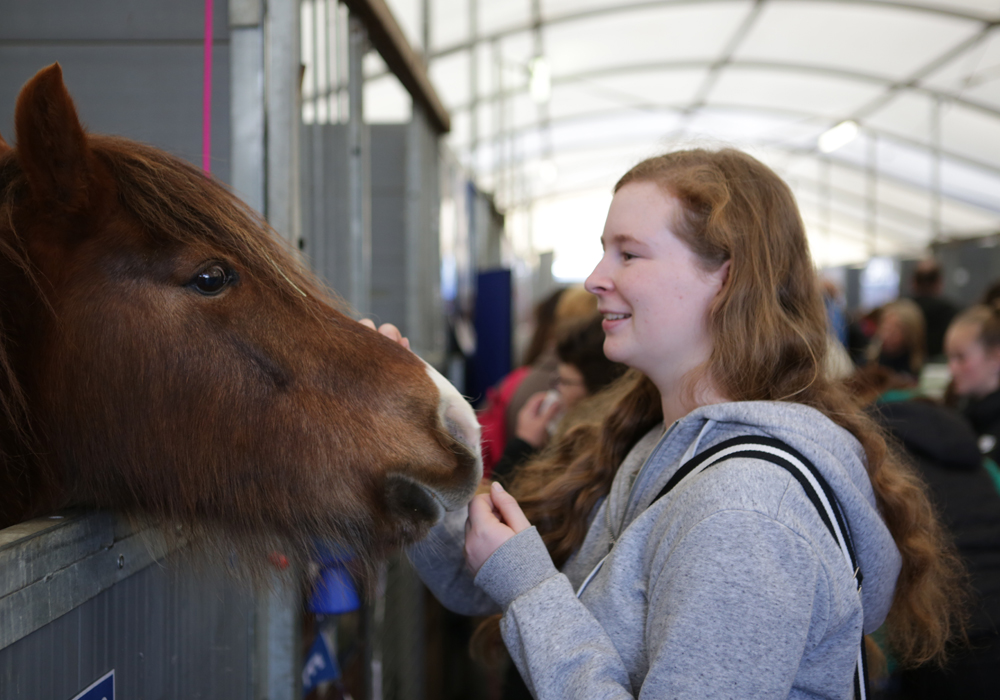 Meet rescue horses and ponies in the Your Horse Live Rescue Village